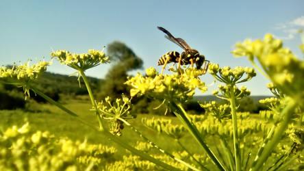 Bee3 by Misko-2083