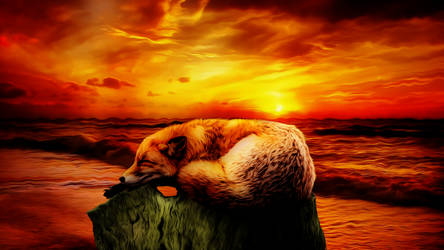 Sleepy Fox Beach 4k Misko 2083