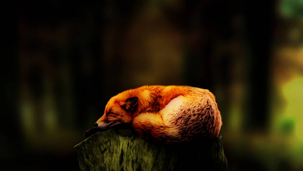 Sleeping fox 1920x1080p v3 Dark Misko