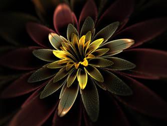 Black Lily. by Kondratij