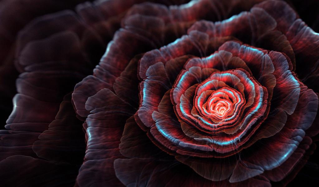 Black Rose. by Kondratij