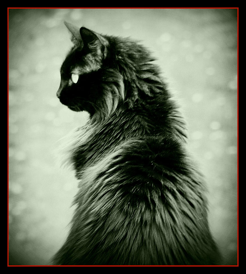 cat by crimsonravenwarrior