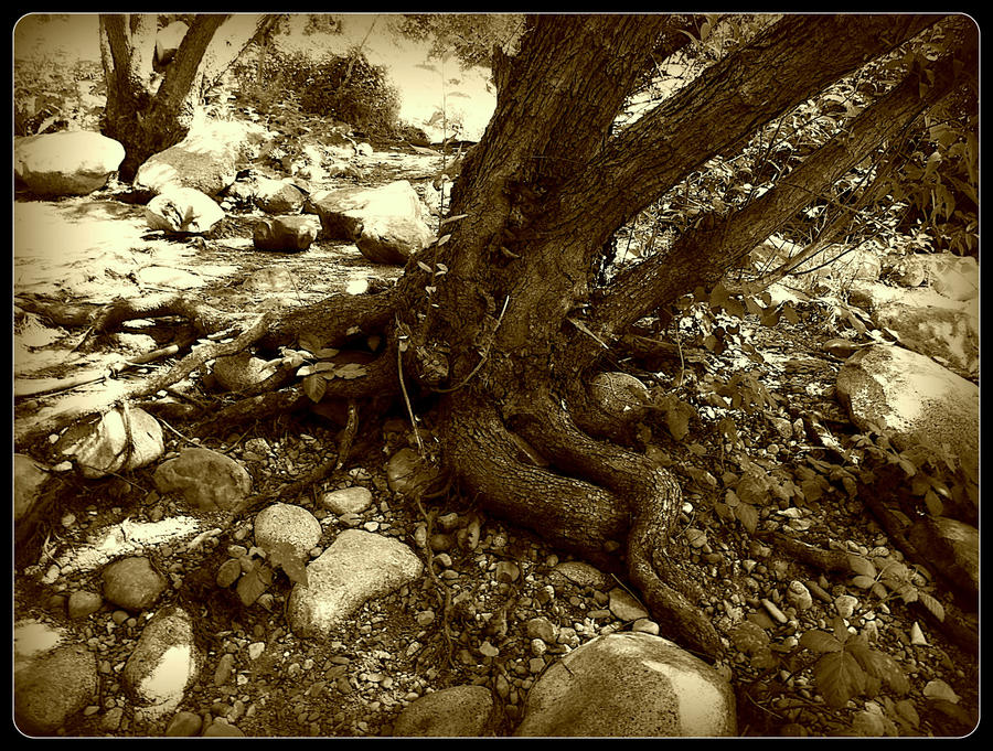 along the Spokane river 33 by crimsonravenwarrior