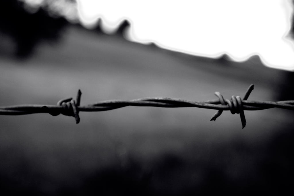 Barbed wire by Distorted-Colours