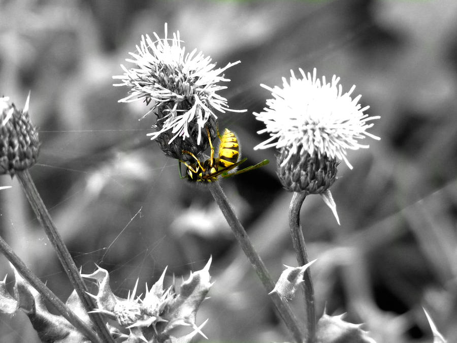 Wasp Edit by Distorted-Colours