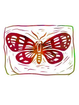 Butterfly 17-12-19