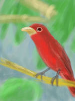 Red Bird by JLai