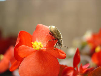 Flower Bug by luizalves