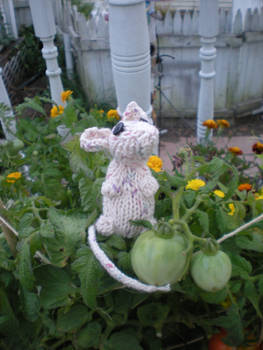 Notch... a knitted mouse