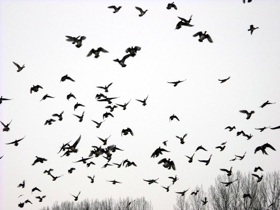 Flying birds, part III