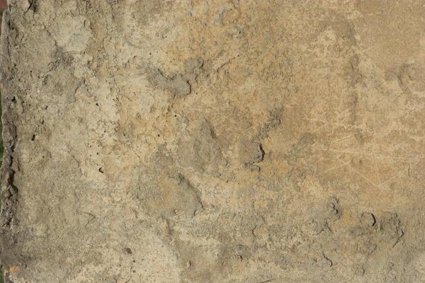 Concrete Wall 5