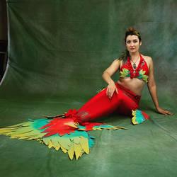 Parrot Mermaid Tail