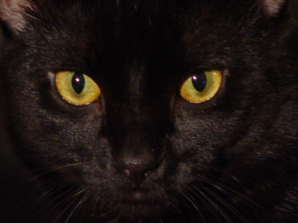 Stock-Black Cat Eyes by melstock