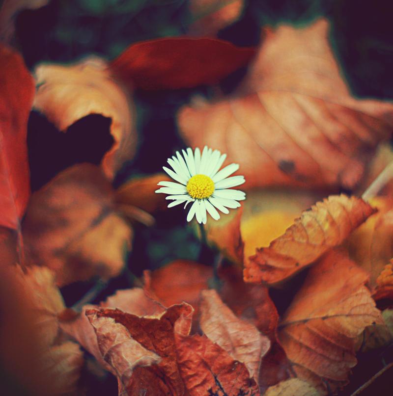 lingering again by AataRax-ya