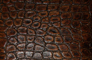 Leather 1 by BFstock