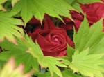 Flower Stock 21