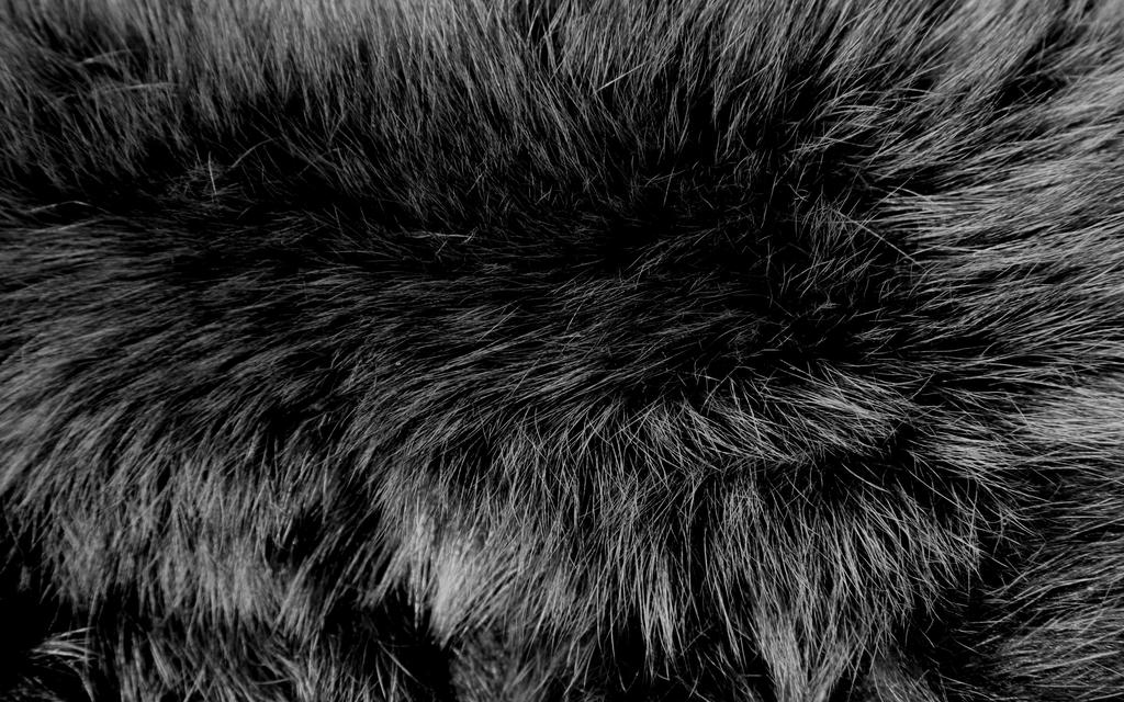 Fur Texture 7 by BFstock
