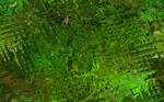 Green Tex 2