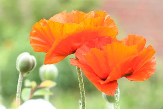 Flower Stock 94