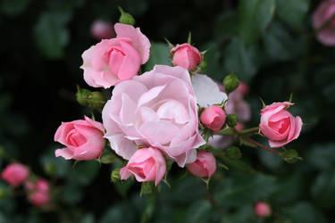 Flower Stock 95