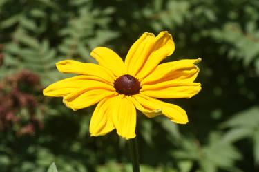 Flower Stock 98