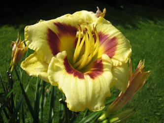 Flower Stock 100