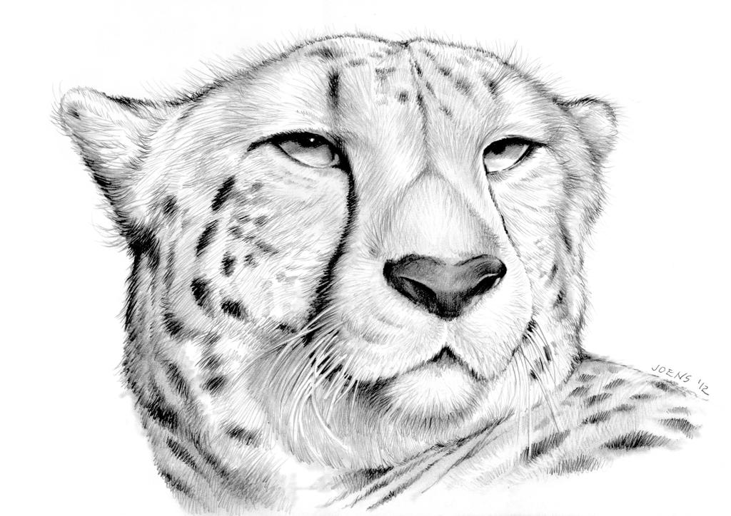 Cheetah by gregchapin