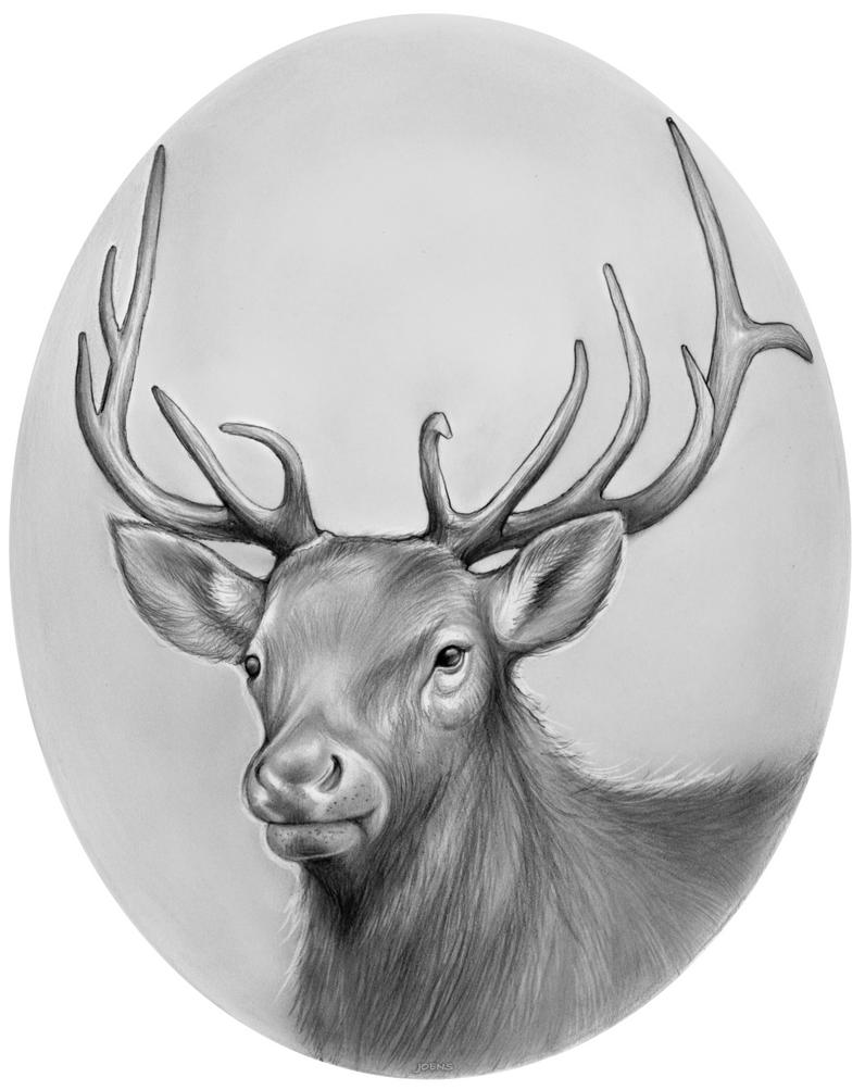 Elk by gregchapin