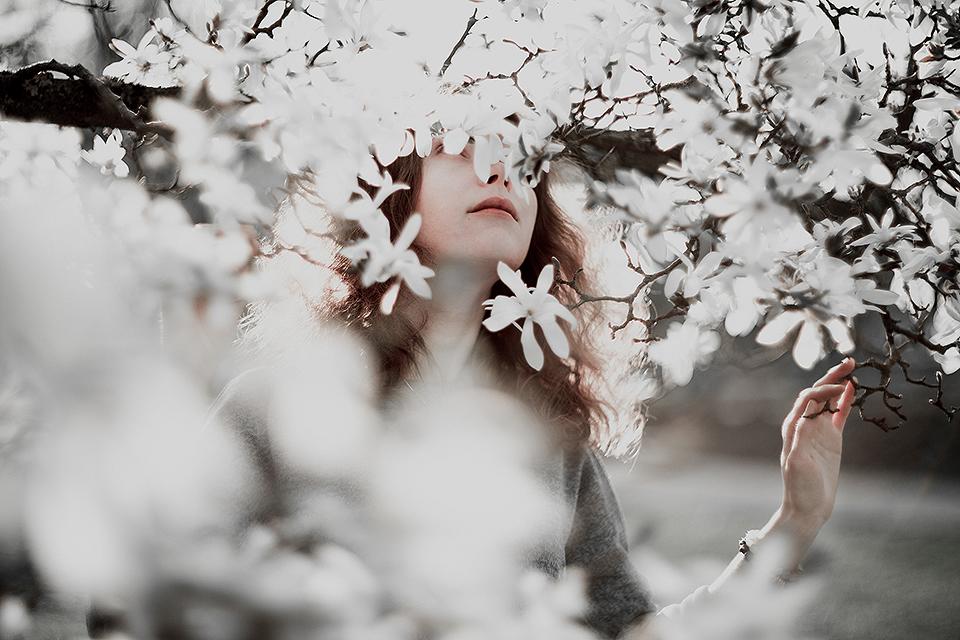 Magnolia by Dferous