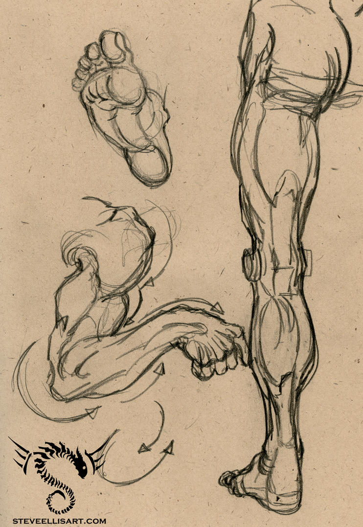 Anatomy Lane: Limbs by Steve-Ellis