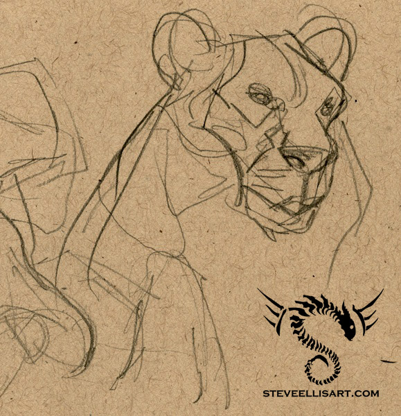 Lioness Sketches by Steve-Ellis