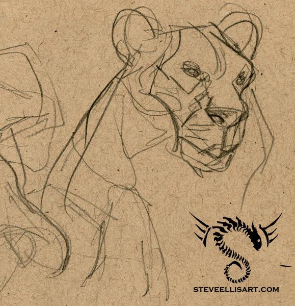 Lioness Sketches by Steve-Ellis