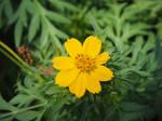 Migombani Botanical Gardens 4