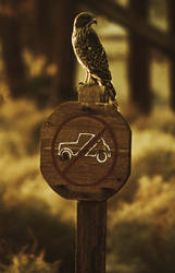 Hawk Parking by BLUEKANJI