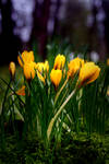 Come in spring by stijn