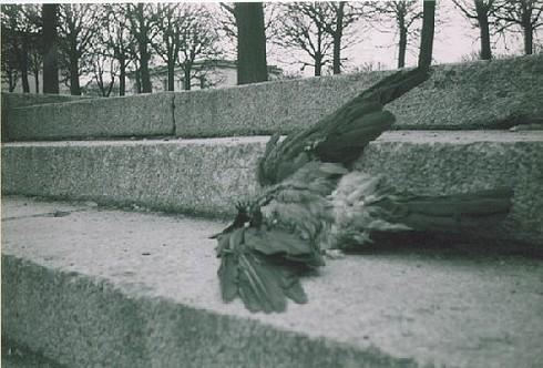 dead bird by schadenwill