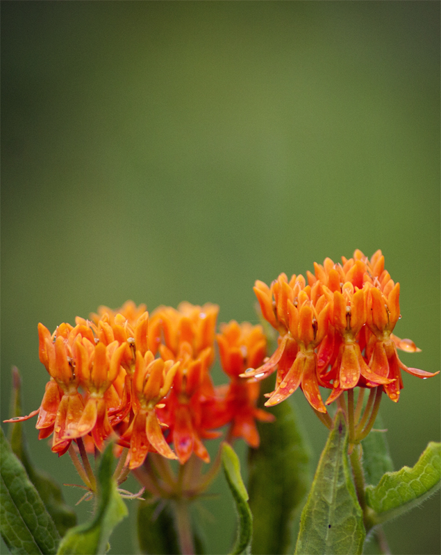 Orange Flowers by DillonStein