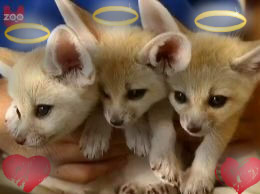 Fennec foxes by Epe0411