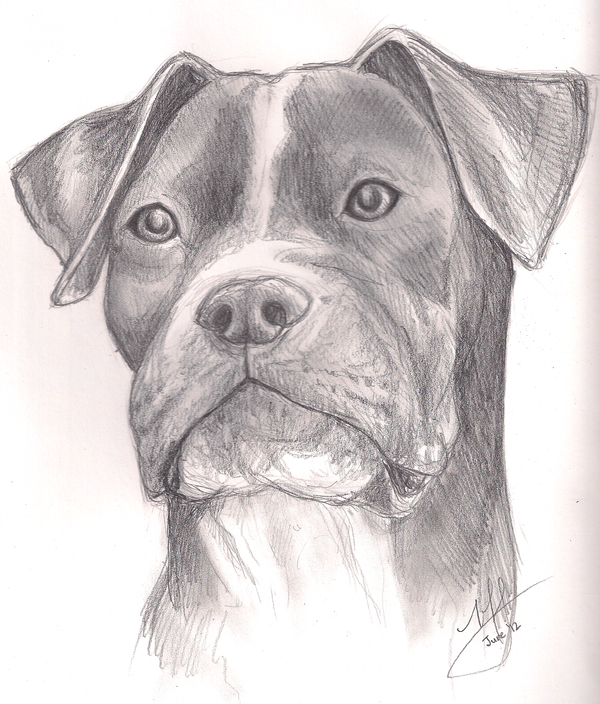 Pitbull by Canyx on DeviantArt