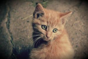 Soft kitten
