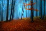 Foggy Misty Autumn Forest 1