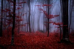 Foggy Misty Autumn Forest 2 by khoirulmahmudinstock