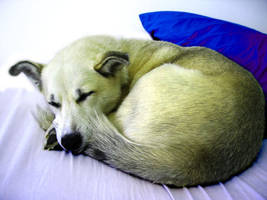 Sophie the Dog - Sleeping by Chrisboe4ever
