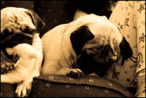 Pugs Four by ahedrick201