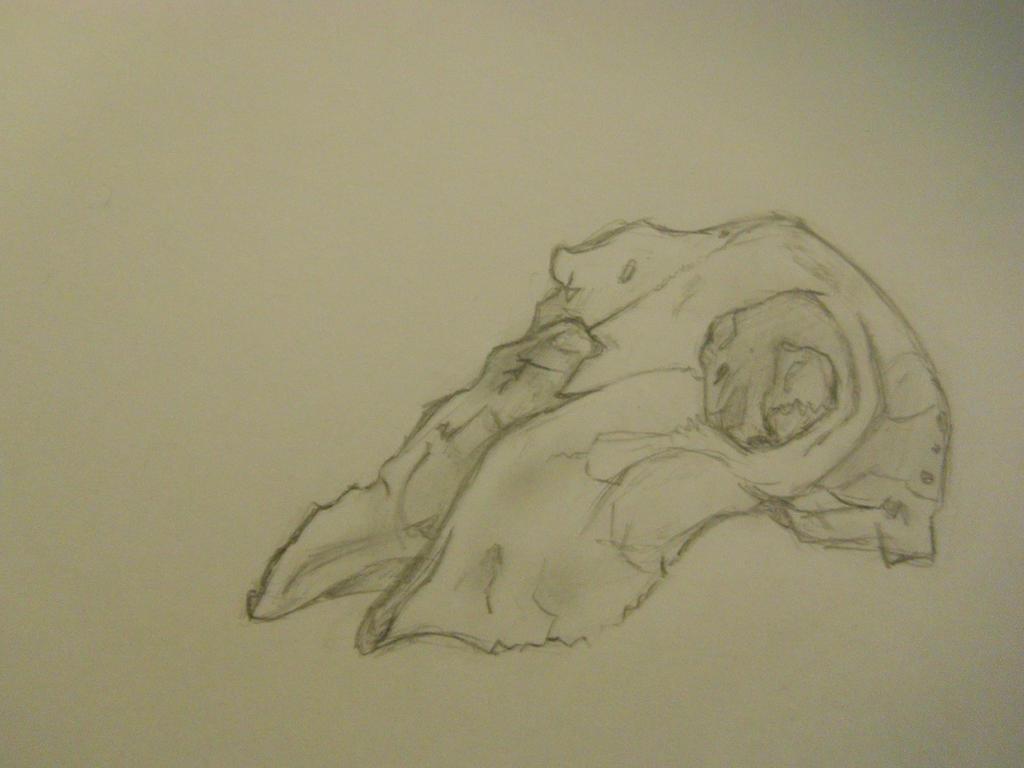 Sheep Skull Observation