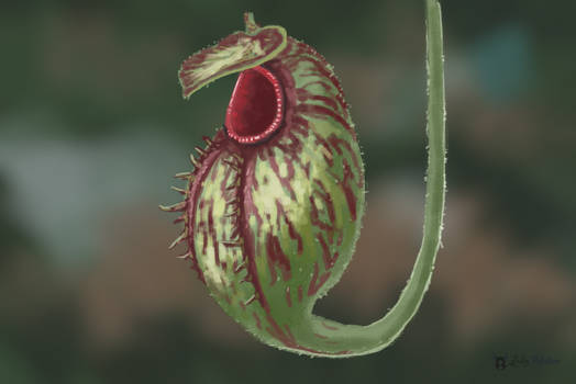 Realistic Study of a carnivorous plant