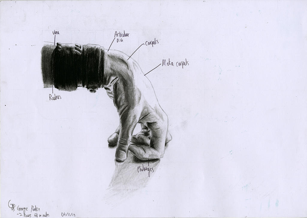 Hand Anatomy Charcoal Drawing 02 by OfficialGeorgeRankin on DeviantArt