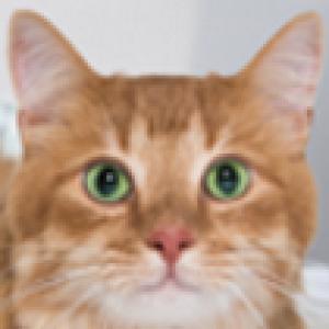 DerpyHappy61's Profile Picture