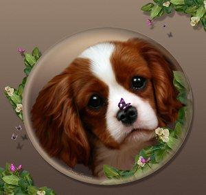 Cavalierpuppy..-SweeetSecret by DigitalArtNetwork
