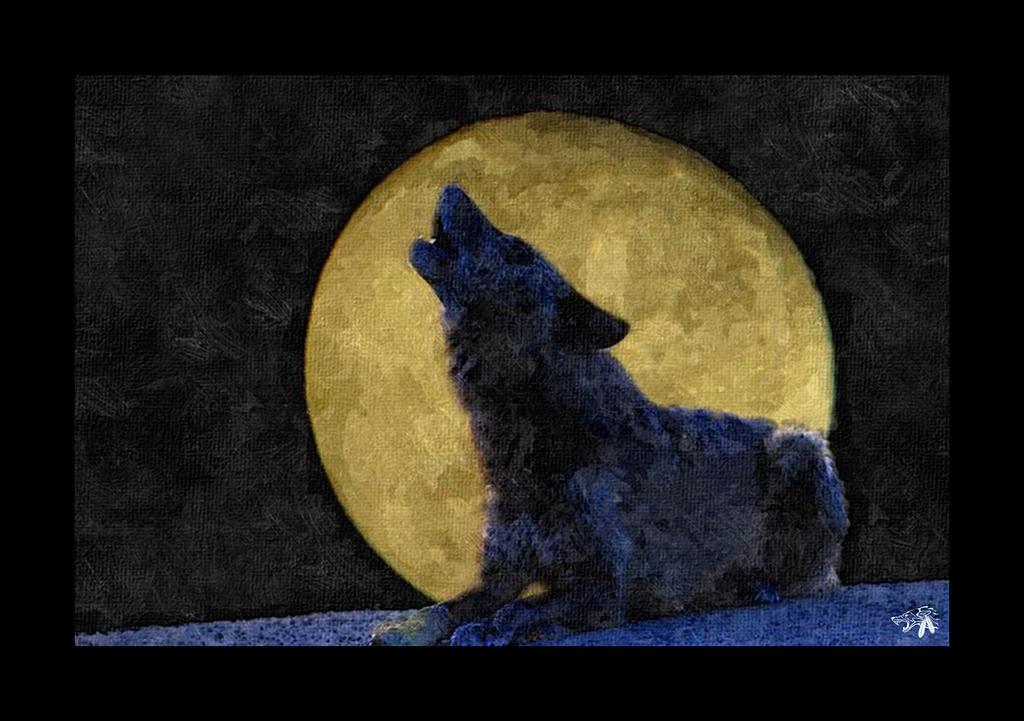 Lonely Wolf by GreyWolfeRun